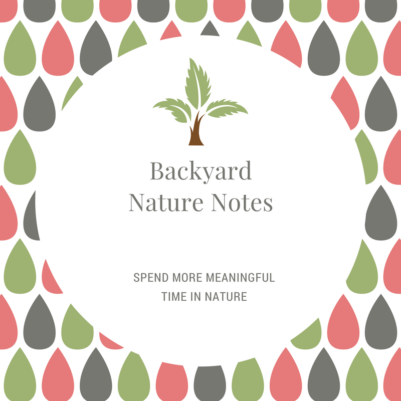 Backyard Nature Notes