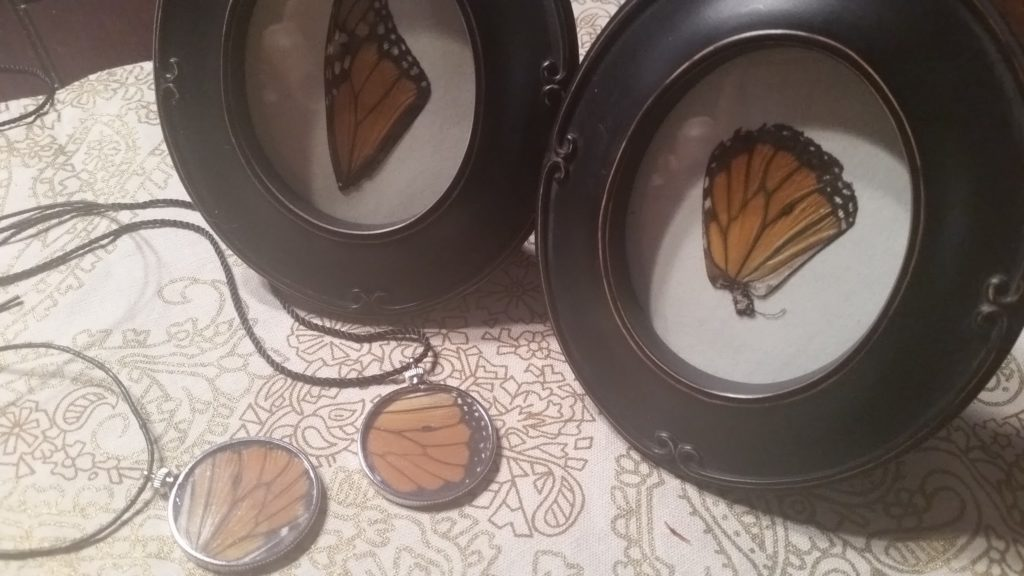 Framed monarch butterfly wing
